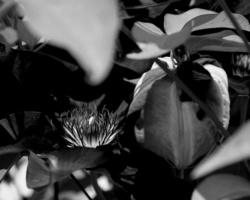 Этюды в летнем виолете. Фото - Светлана Мурси-Гудёж