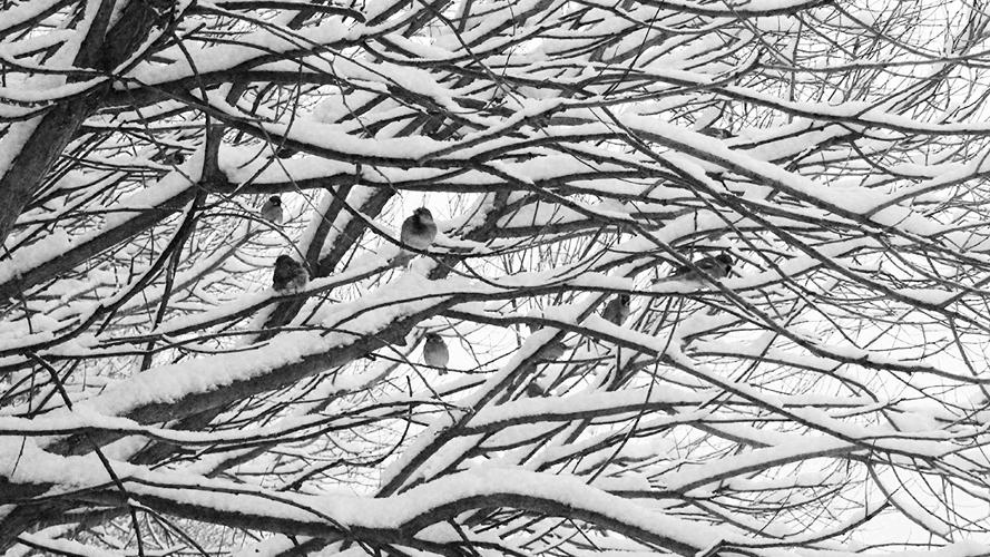 Кадры зимы-2018. Фото - Светлана Мурси-Гудеж