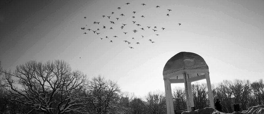 Парк Дубки. Фото - Светлана Мурси-Гудеж